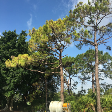Deep-Root-Fertalization-Trees-and-Turf.1